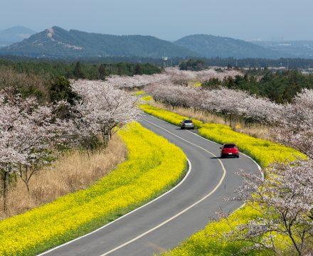 벚꽃 인생샷 찍고 싶다면 여기로 가자!
