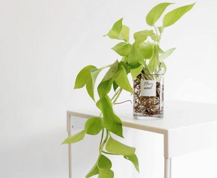 공기정화 + 인테리어 = 이런 식물이 답이다!